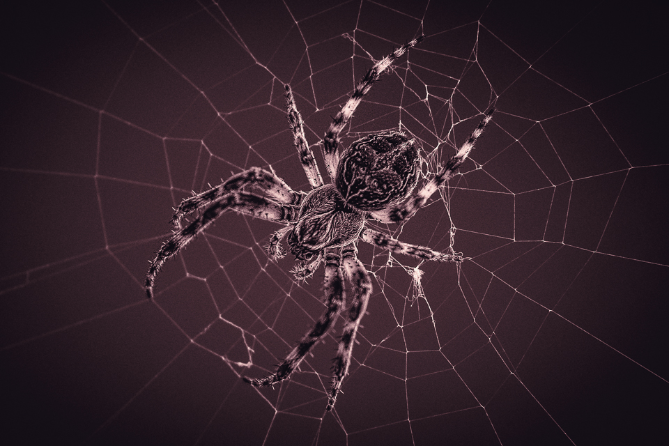 Foto Haaser - The spider and its web
